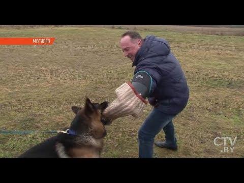 Вопрос: С какой целью собаку учат нападать?
