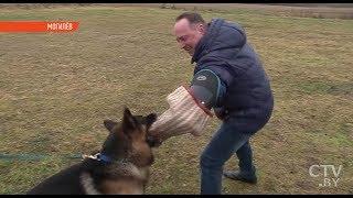 Как собак учат ловить преступников | Первая школа кинологов-фигурантов открылась в Беларуси