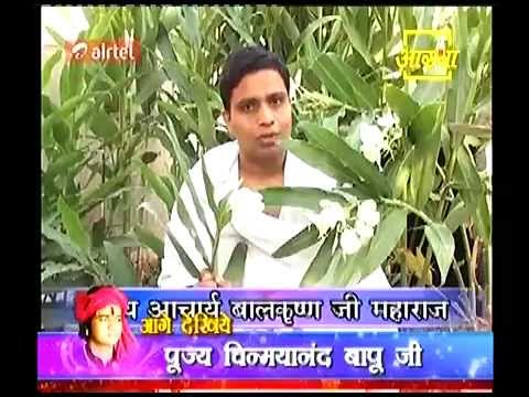 Download Todays Ayurvedic Plant Gulbakawali (गुल बकावली ) By -Acharya Balkrishn 31 Oct 2012