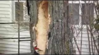distrugătorii pădurilor românești