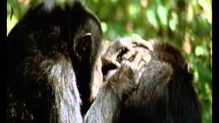 Docufilia, Evolucion 06 Por Que El Sexo