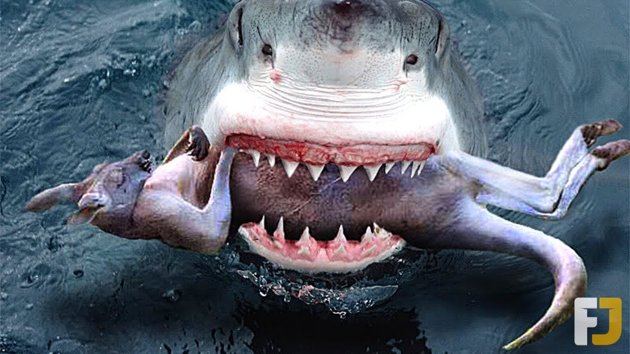 11 Insane Things Swallowed By Sharks