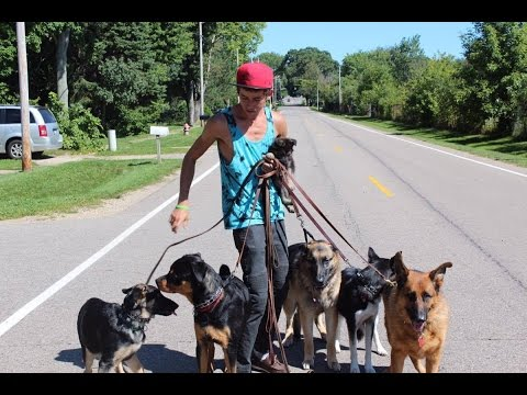Dog trainer travels 700+miles to help clients