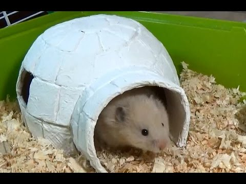 How to Make an Igloo House with Paper Mache Technique   DIY Hamster House