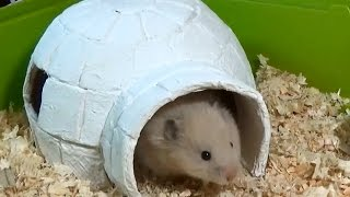 How to Make an Igloo House with Paper Mache Technique | DIY Hamster House