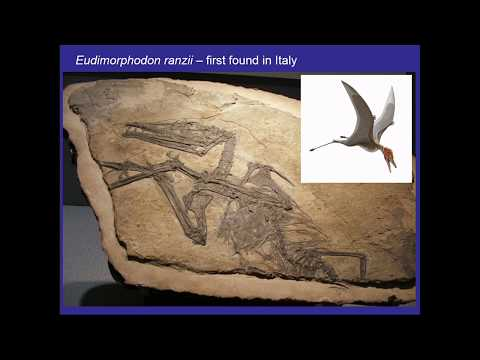 Over the Heads of Dinosaurs: Pterosaurs