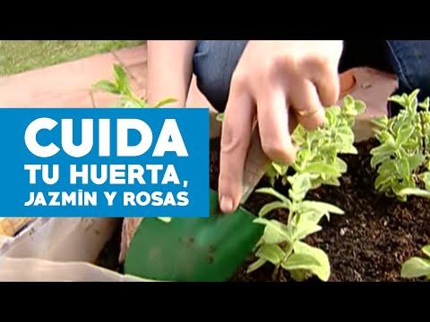 C mo cuidar un jazm n rosas y hacer una huerta youtube for Huerta de aromaticas en macetas