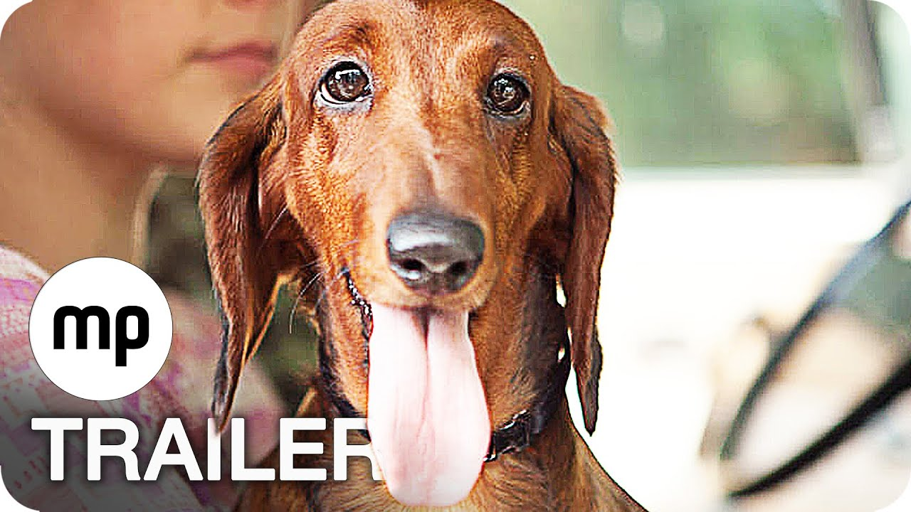 wiener dog trailer