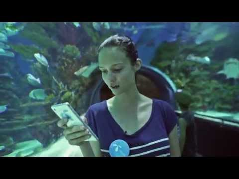 Szikszai Johanna cápák közé merül! - Telenor Kihívás