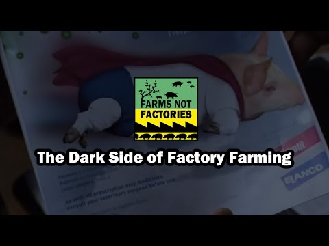 The Dark Side of Factory Farming