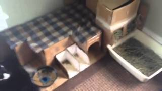 House Rabbit Home Design