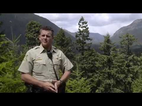 Forest Cop Faces Human And Natural Threats