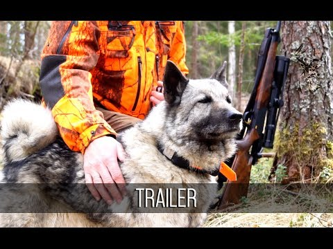 NH: TRAILER | Moose Hunting 2017