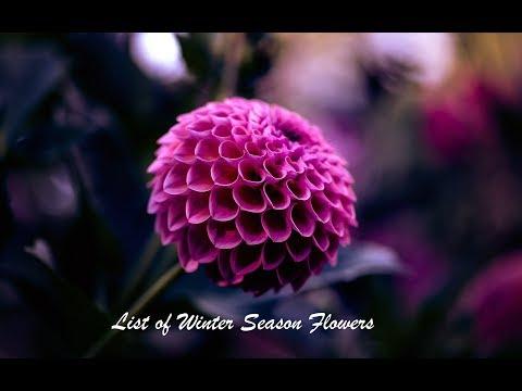 List Of Winter Season Flowers (70 Plus Different Varieties)
