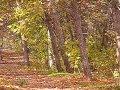 Miniature de la vidéo de la chanson The Last Leaf