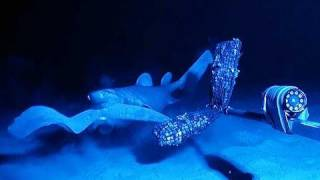 Scientists film hagfish anti-shark slime weapon