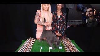 Котка Познава Мачовете От Световното?