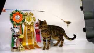 Фотосессия котов призеров котовыставки ;)(, 2012-09-23T20:03:54.000Z)