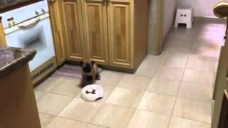 Puppy waits for food
