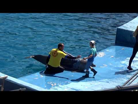 ВЛОГ Валенсия Дельфинариум! Vlog Valencia Oceanografic ! Episode 2  The Dolphin Ballet!