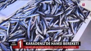 Balık fiyatları TRT1 Ana haber 26 Ekim 2017 Balık Video