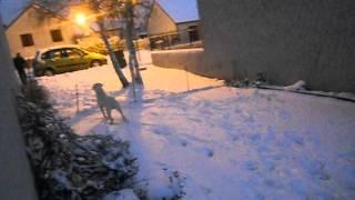 Falco Qui Kiff Les Boule De Neige 20 01 2013