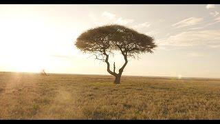PNL - La vie est belle [Clip Officiel] (Réal. Mess) thumbnail