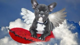 Память о собаки грустный клип😢