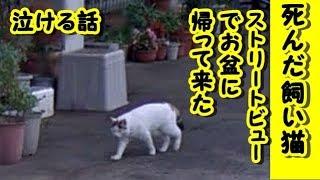招き猫ちゃんねる・ チャンネル登録はこちら! https://www.youtube.com...