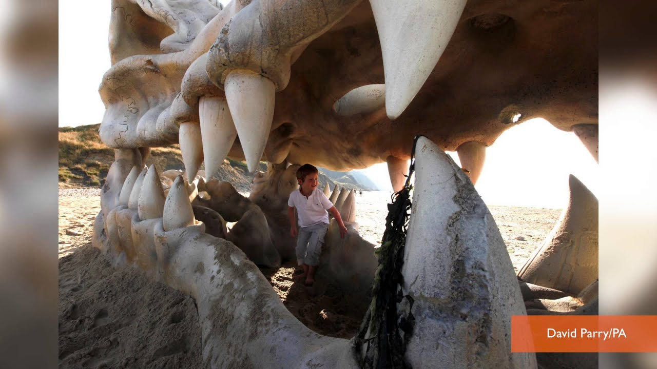 Free 3d Skull Wallpaper Dragon Skull Left On Beach To Promote Game Of Thrones