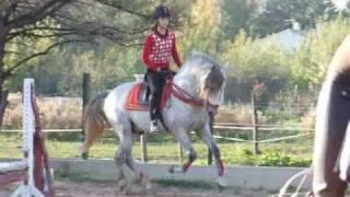 Jumping : Quintero XVII, étalon PRE sur ses 1ers parcours
