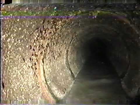 & Cockroaches in sanitary sewer - YouTube
