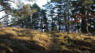 Carl von Linné - Fjällaskogen