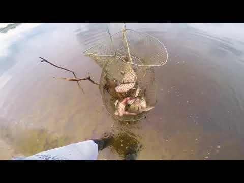 Ловля щуки и судака спиннингом на реке Припять в Беларуси
