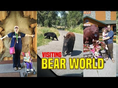 Visiting BEAR WORLD!! (Yellowstone Attraction)