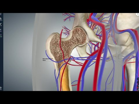 Poliklinika Harni - Dob menopauze ključna za procjenu rizik za frakturu