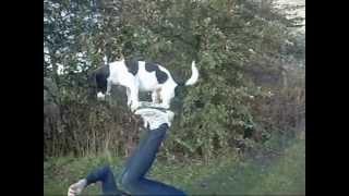 Jack's Clever Dog Tricks!