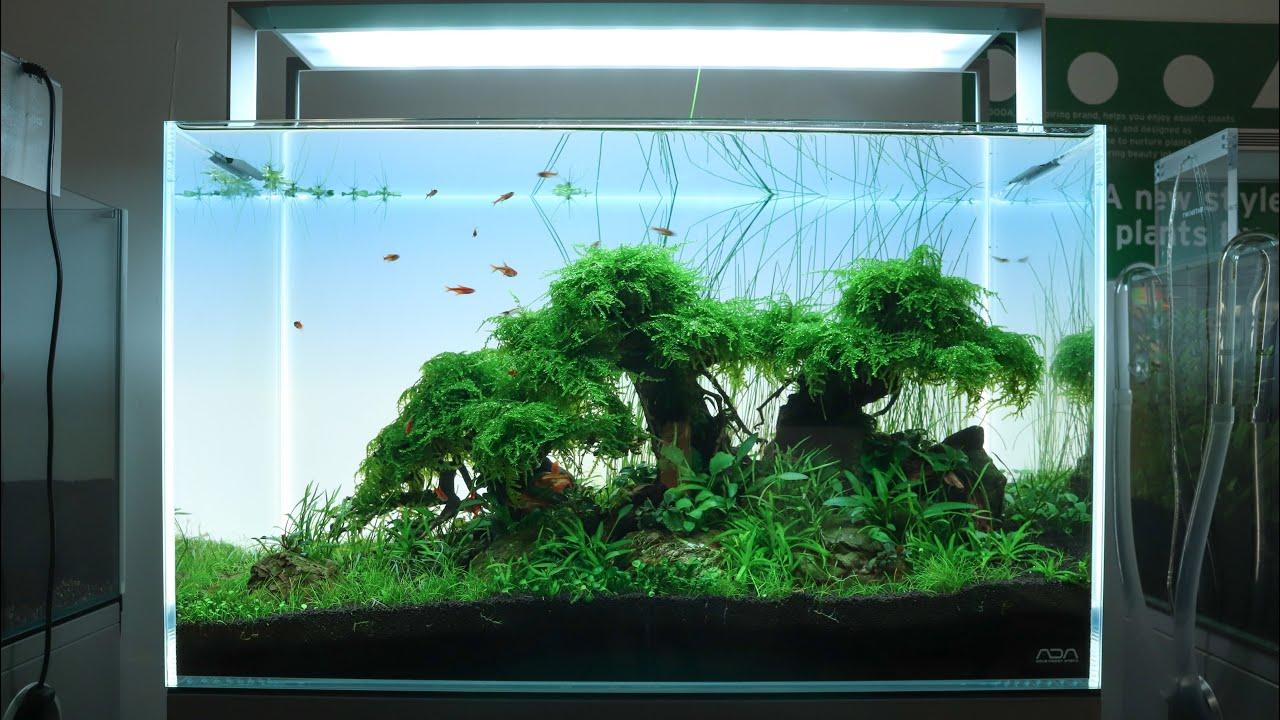 Aquascaping Tutorial, Step by Step 60cm Bonsai Tree Planted Aquarium