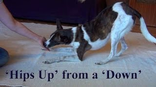Positions Bow From Down- Clicker Dog Training Tricks