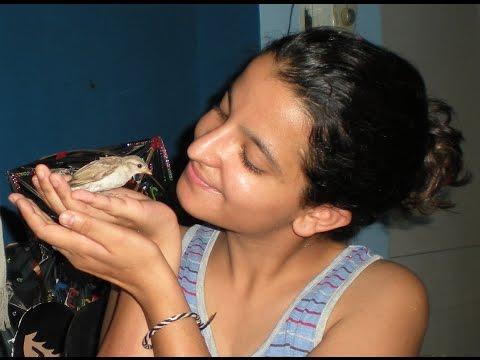 SHAKIRA - My Friendly Sparrow (rescue, Raising U0026 Release !)