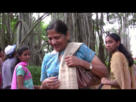 The Big Banyan Tree of Bangalore -- India