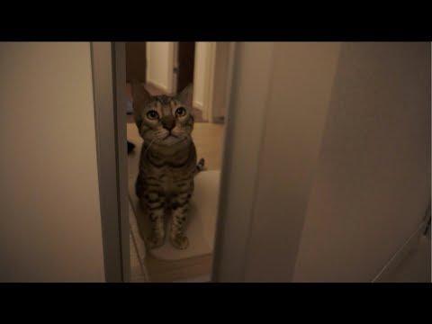 お風呂に入ると心配して来てくれるルト