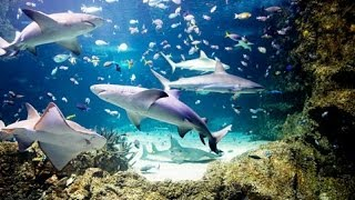 Sydney, Australia: Aquarium & Wildlife World