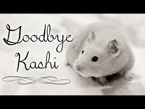 ~ Goodbye Kashi ~