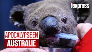 Incendies en Australie : des scènes d'apocalypse