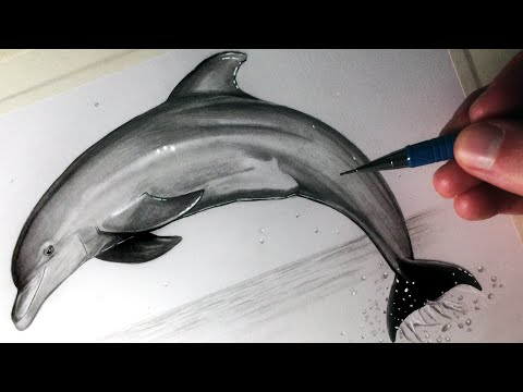 how-to-draw-a-dolphin
