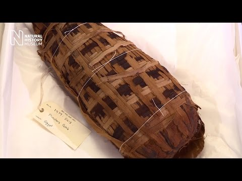 Animal mummy reveals its secrets | Natural History Museum