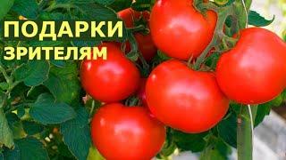 Какие томаты непременно посадим в этом году