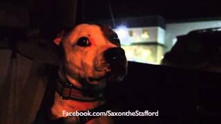 Saxon At Weight Pull