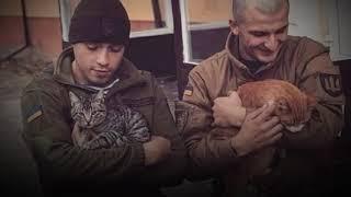 ЗВОРУШЛИВЕ ВІДЕО: військові та котики на передовій
